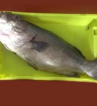 peces-mar-bilbao-sukalde